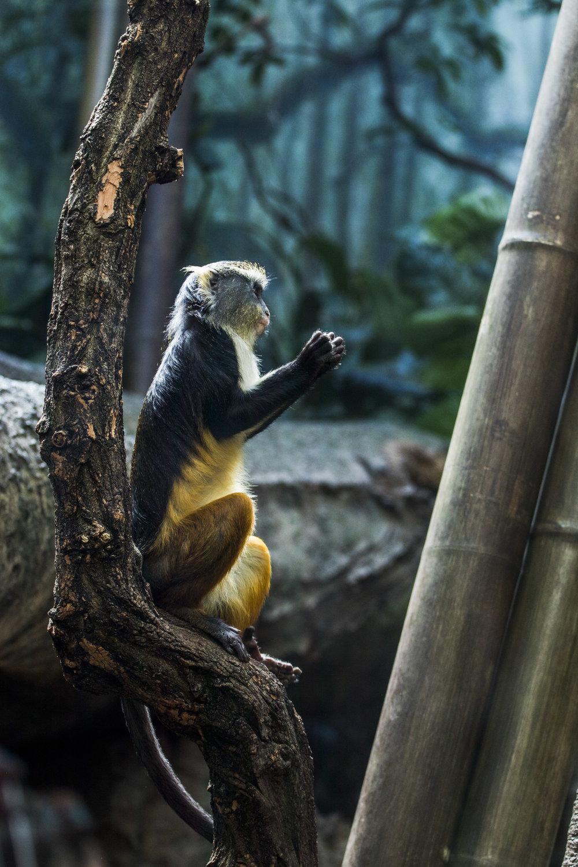 Zoo-27.jpg