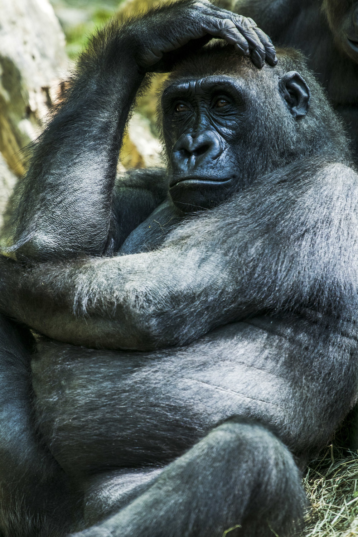 Zoo-33.jpg