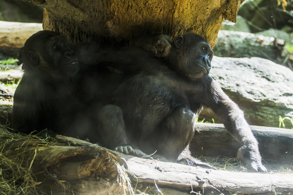 Zoo-43.jpg