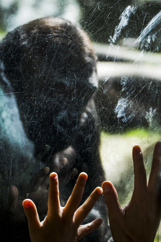 Zoo-44.jpg