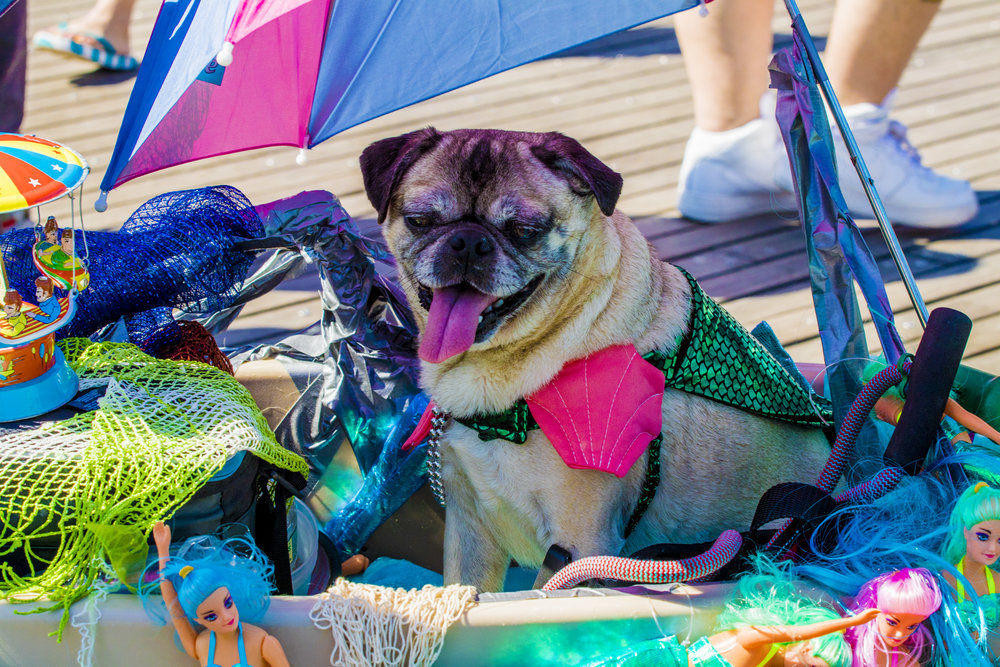 MermaidParade2018-154.jpg