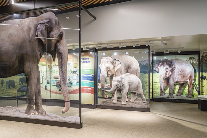 Exhibit in Forest Hall, part of the Elephants Lands at the Oregon Zoo.