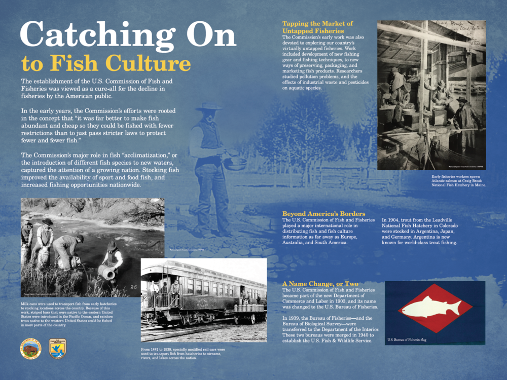 Catching on to Fish Culture