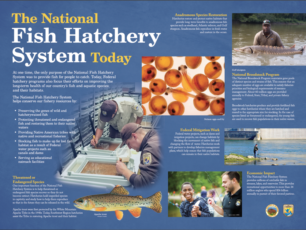 The National Fish Hatchery System Today