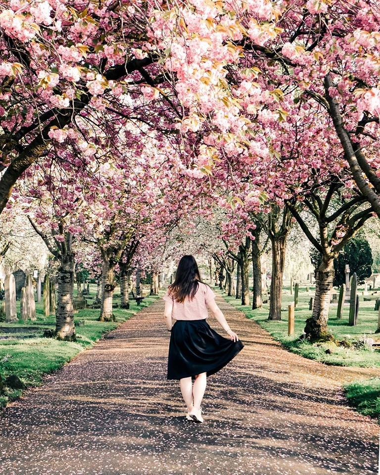 london-cherry-blossoms