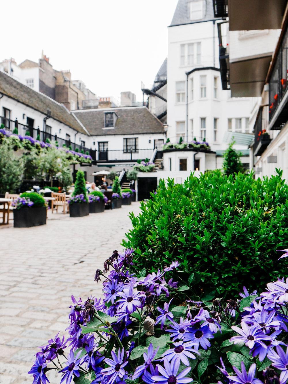 london-in-bloom