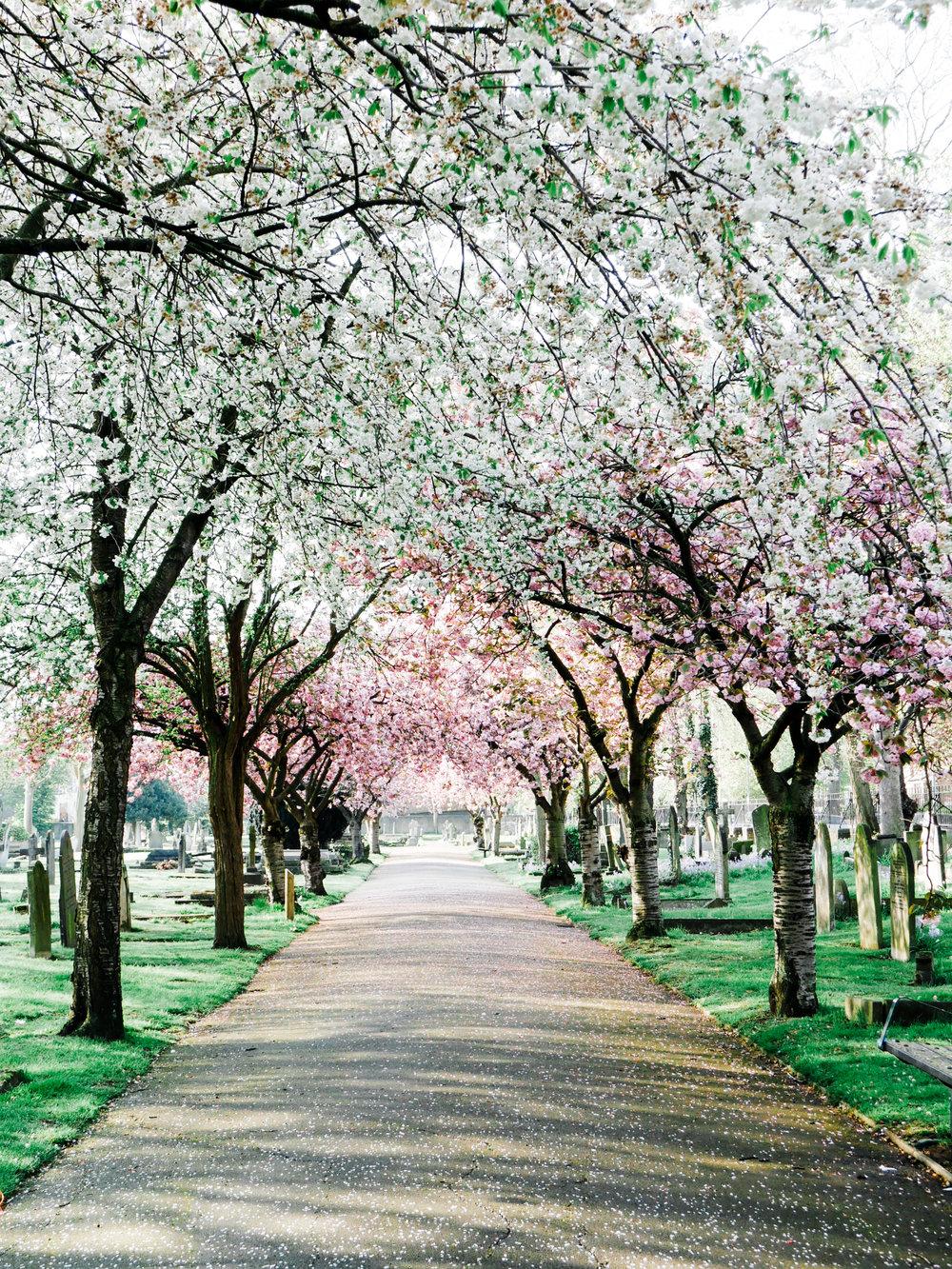 spring-in-london