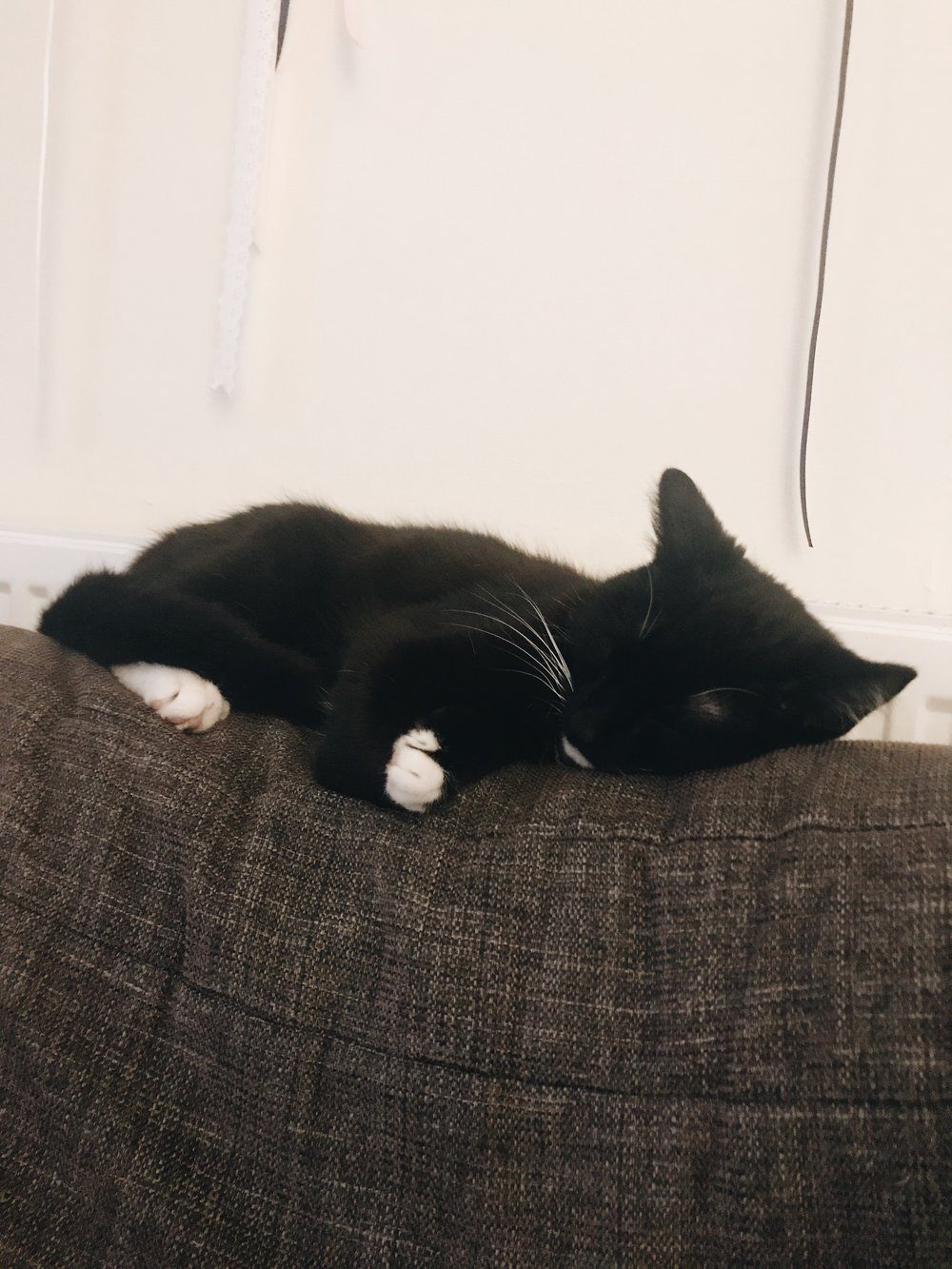 All About Jake - Fostering Kittens for Furbabies