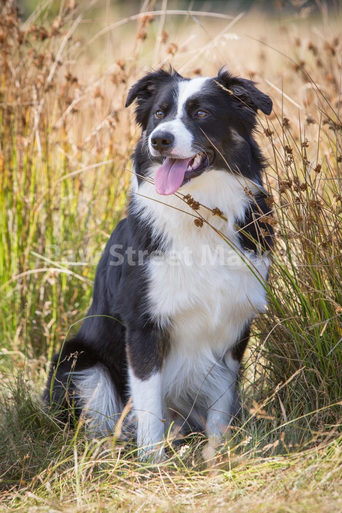 019_Kelly_SMALL_Jasper-Ollie.JPG