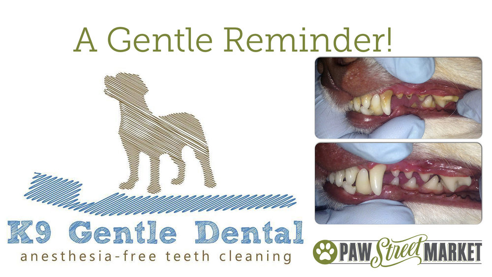 K9-Gentle-Dental-Reminder.jpg