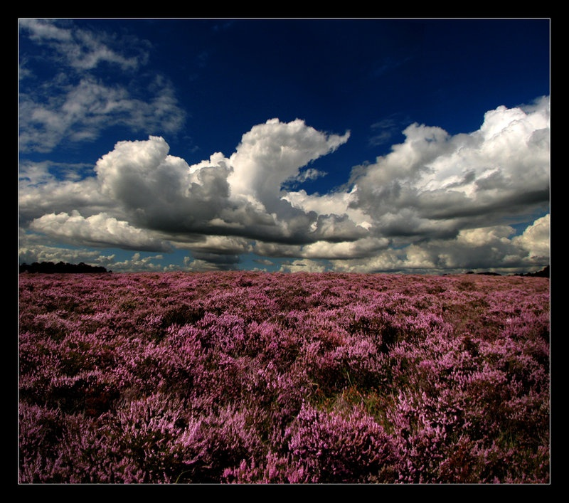 heather_fields_by_p0rg.jpg