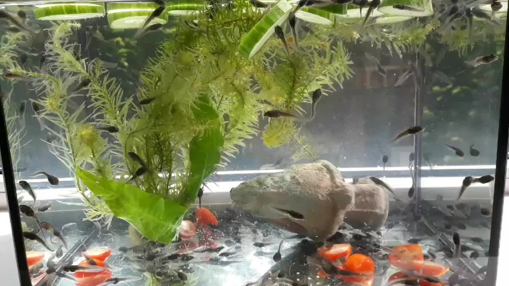 Can you guess what's in the fish tank?
