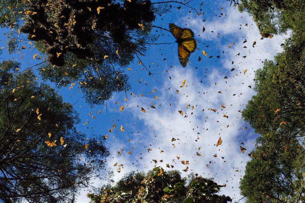 butterfly's.jpg