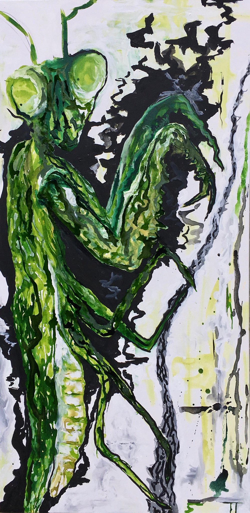 "TWITCH THE MANTIS 24"" x 48"""