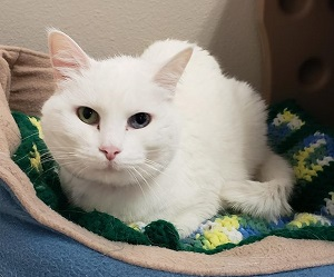The HSFC received over 60 cats in two weeks in May.