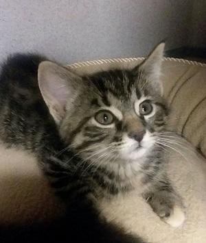 Humane Society has plenty of kittens as well