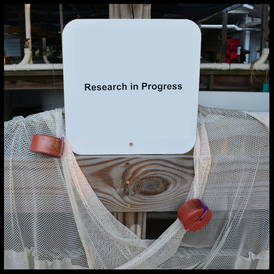 research_in_progress_compressed_border.png