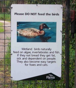 Don't feed the birds!
