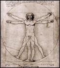 Human Body Leonard Da Vinci