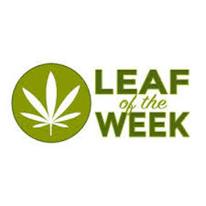 Leaf of the Week    LeafoftheWeek.com is a sister company to AboutBoulder.com, the go-to website for instant information on Boulder, Colorado. LeafoftheWeek.com is dedicated to educating and informing people on marijuana culture, industry, and news. Articles on the website are posted every day of the week, and features writers knowledgeable on cannabis culture.