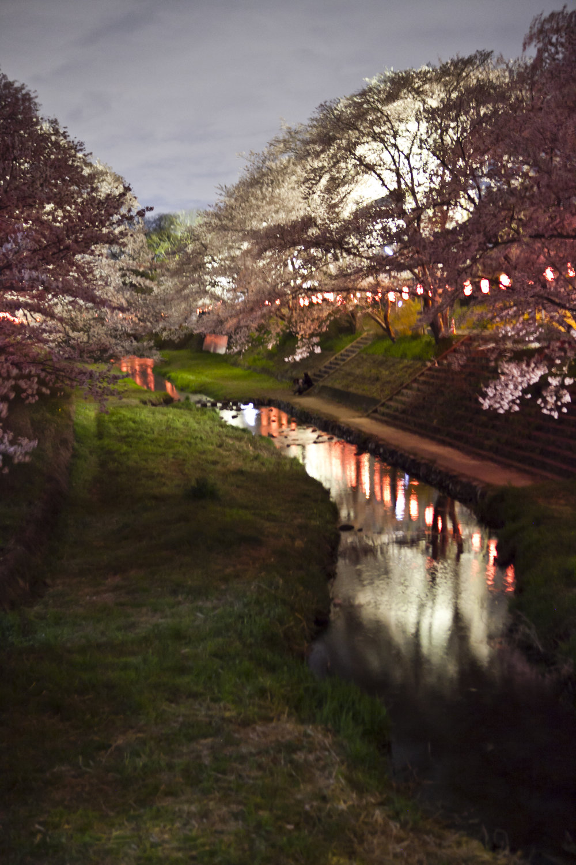 Kyotanabe Sakura creek 2.jpg