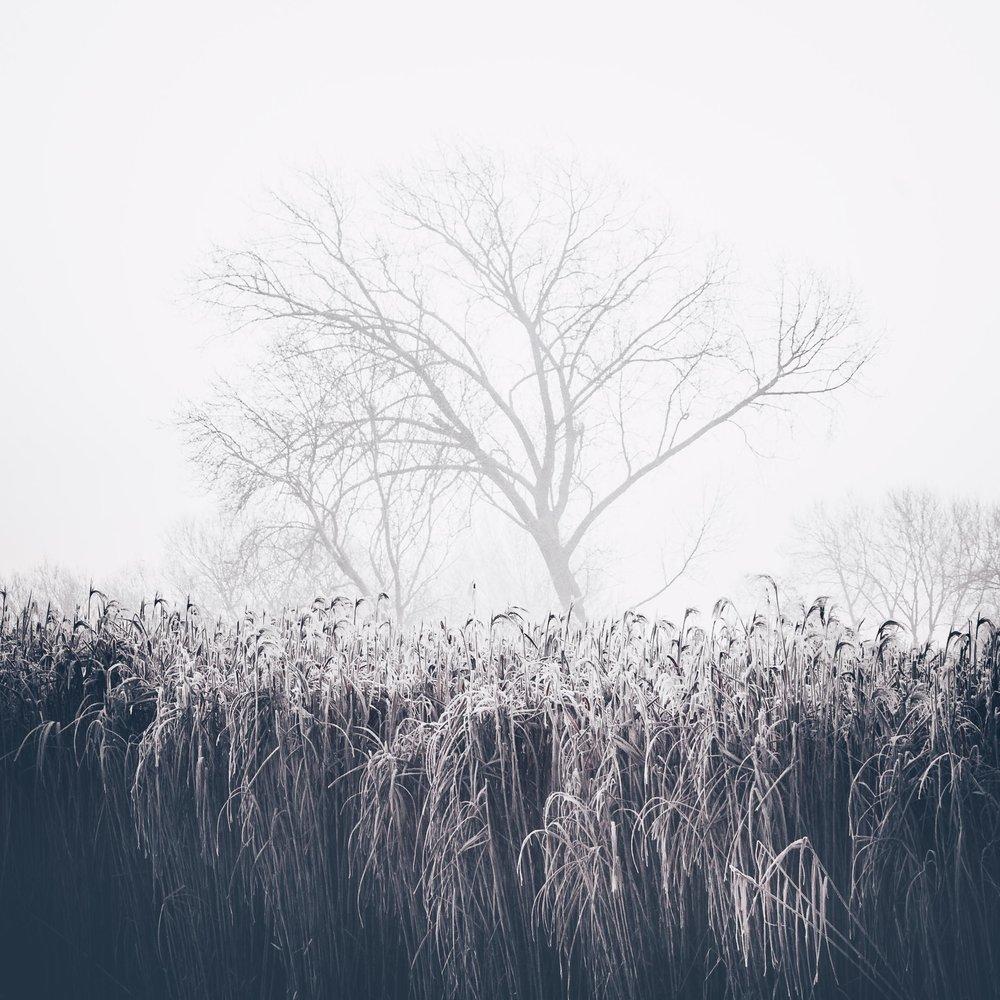 Winter's Dust