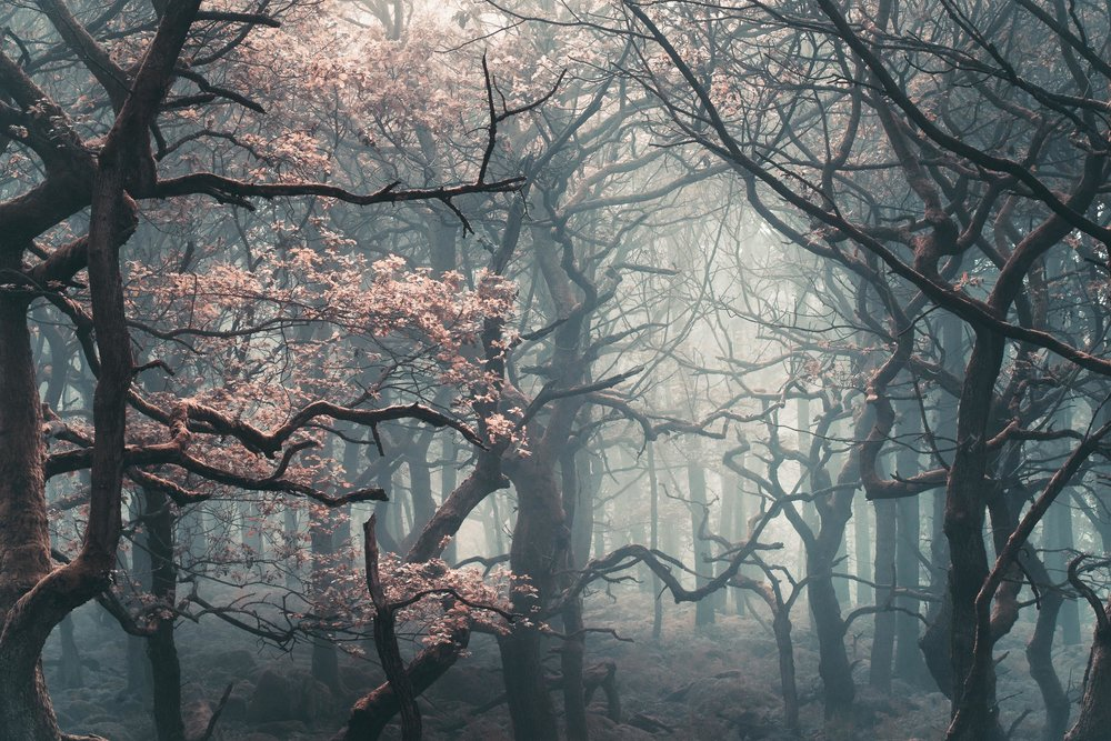 Shadow Woods