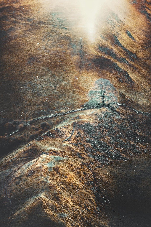 Scarred Landscape