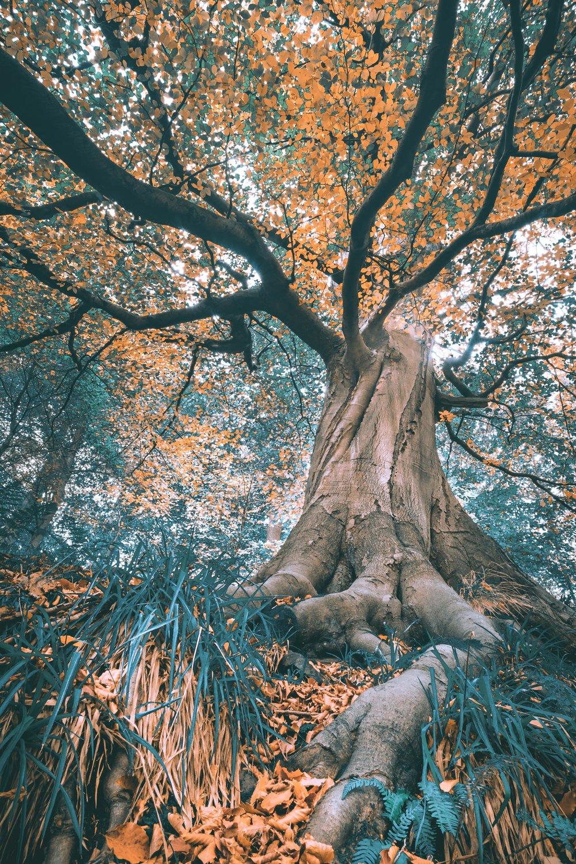 The Wild Wild Wood