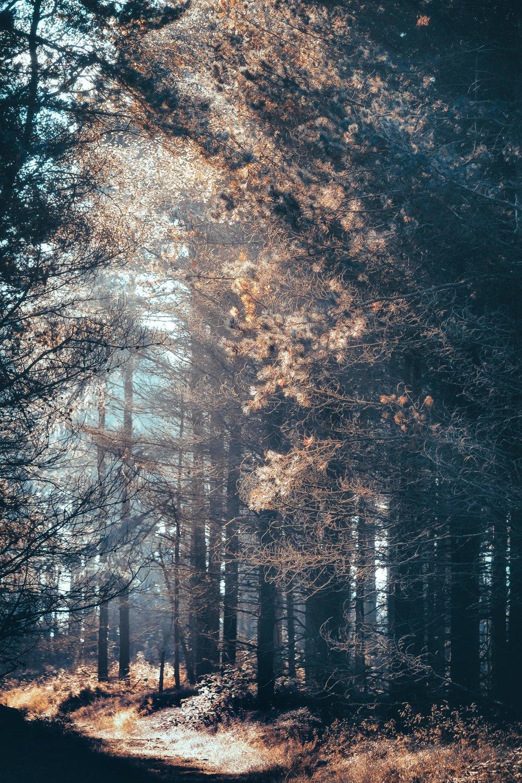 Shimmering Sunlight