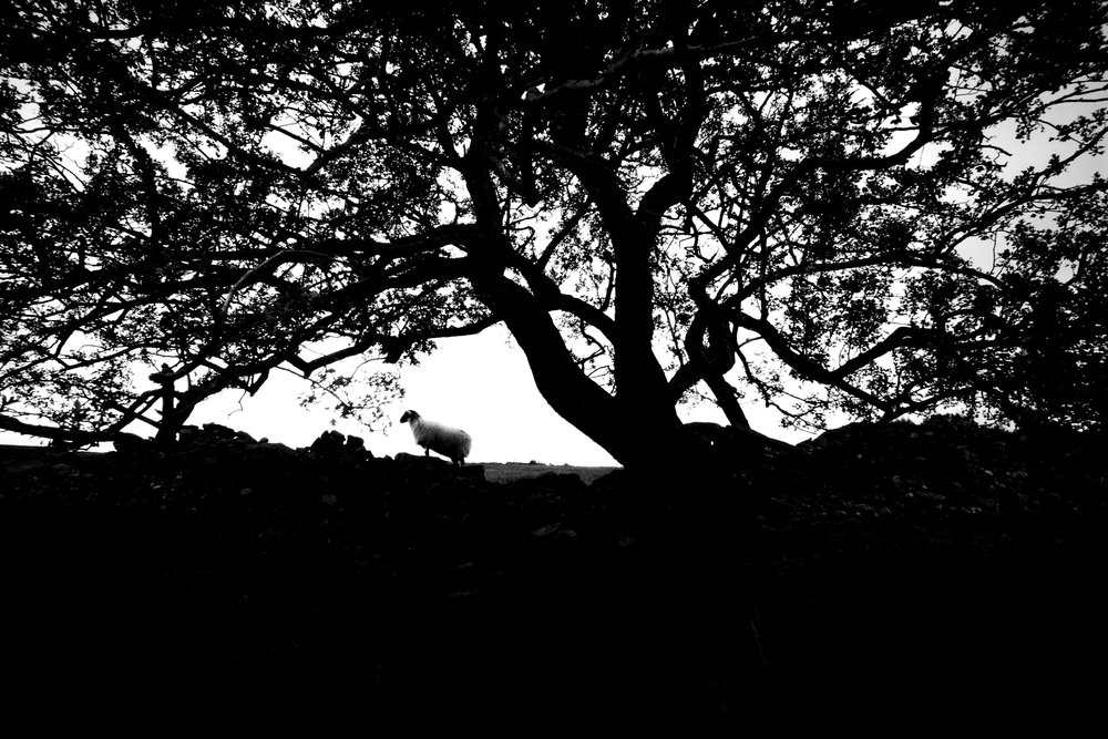 Countryside Silhouette 3:2