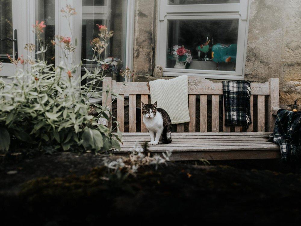 Guard Cat