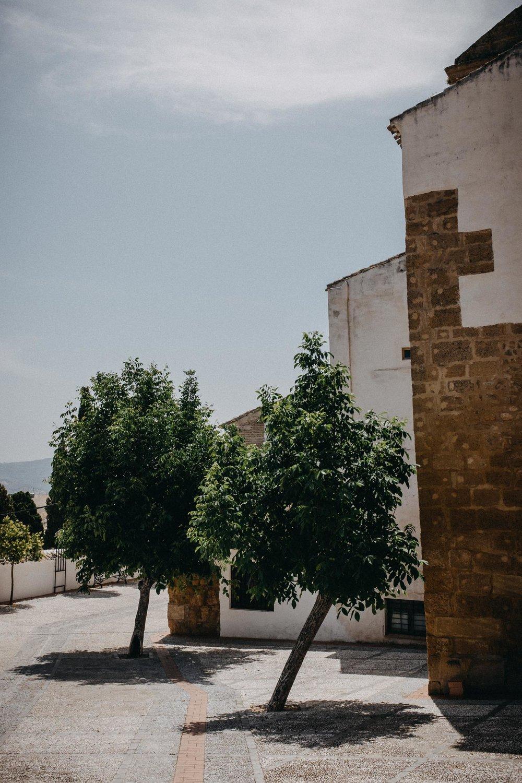 Leaning Tree of Iznájar