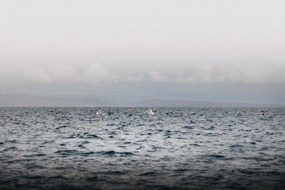 Gannet Bombs