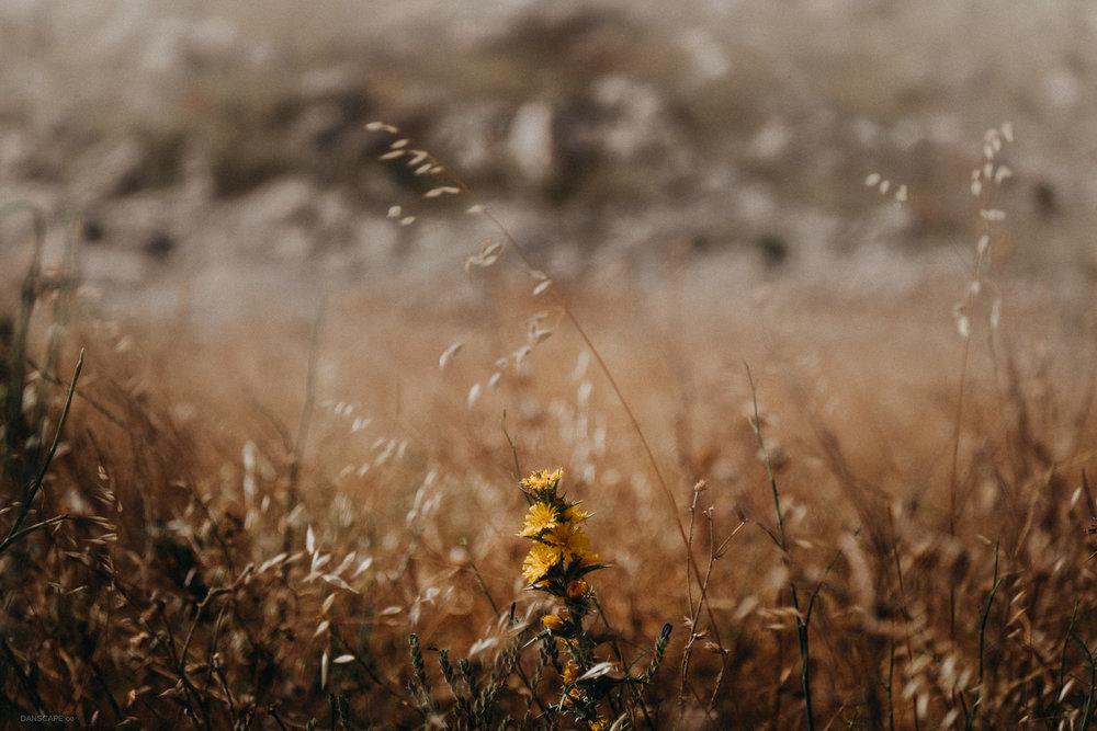 Yellow Wild Flower of El Torcal
