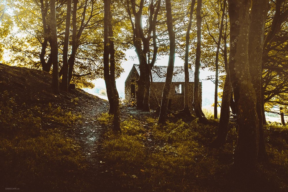 A barn in the woods