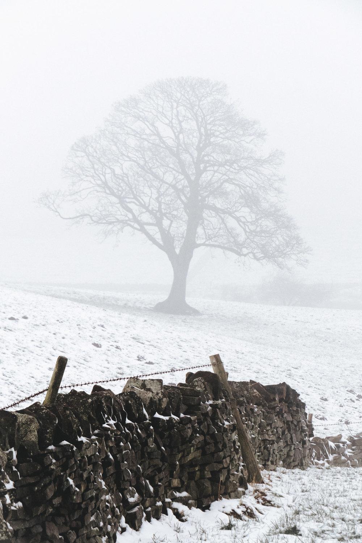 Winter at Lodge Moor