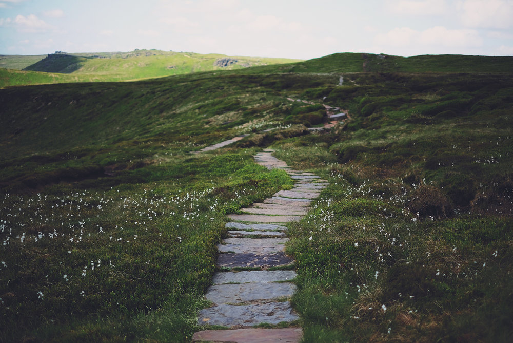 Path Through the Cotton Grass