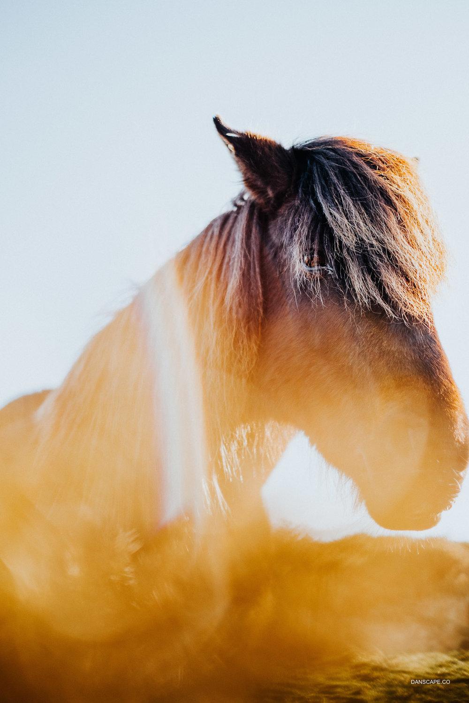 Sunshine Pony