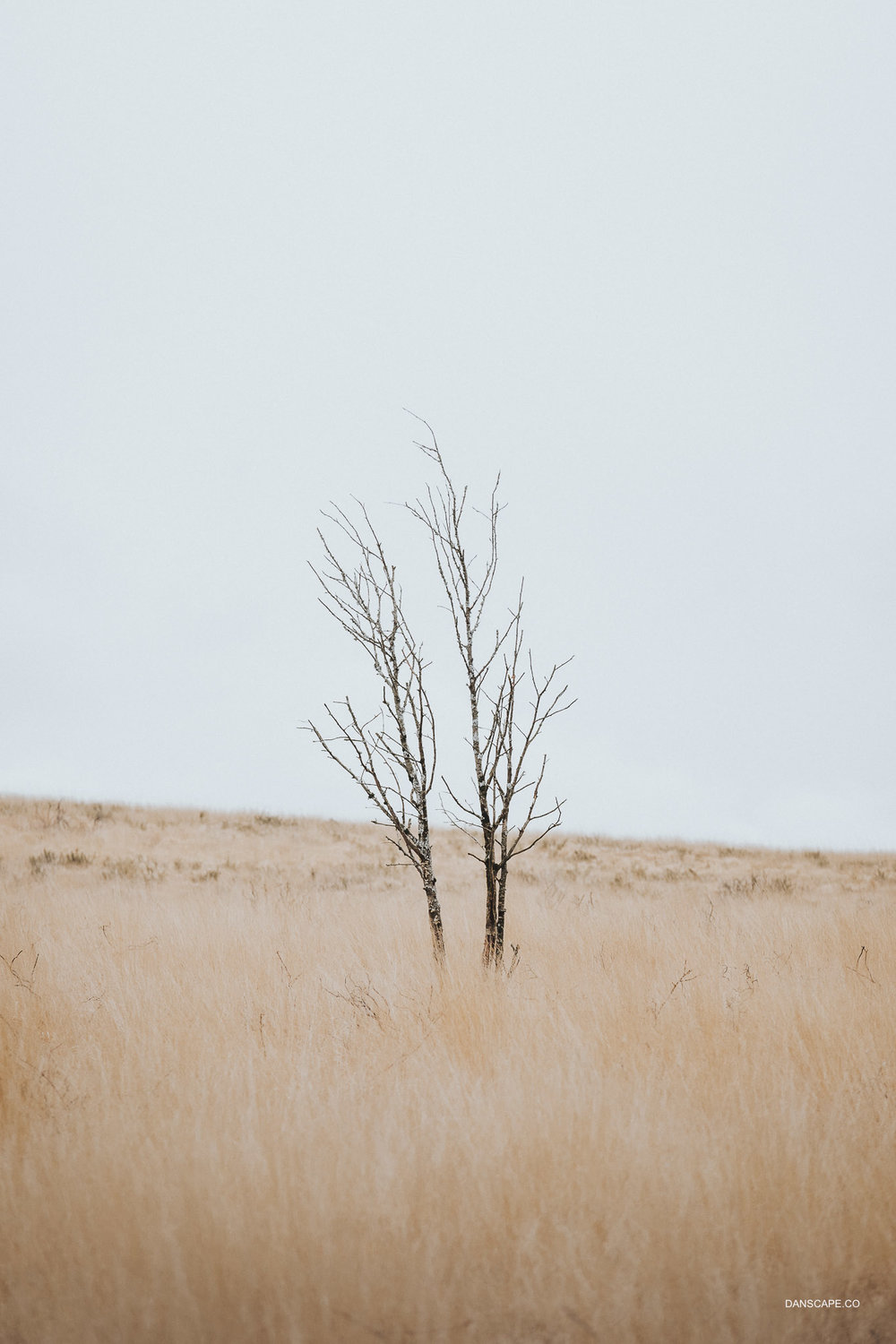 Lone Tree in the Grasslands