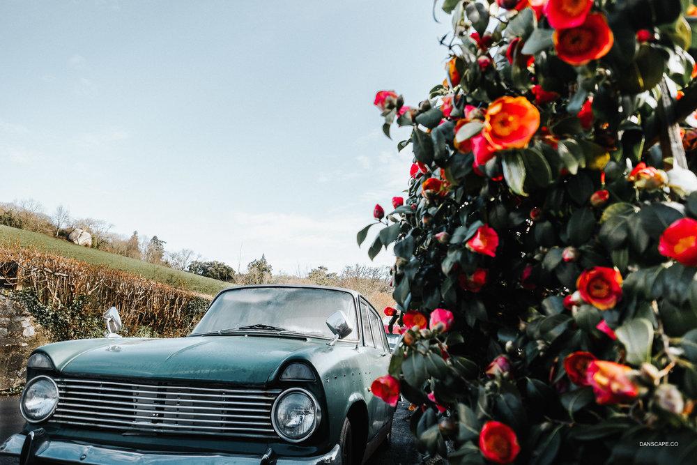Rosebush & Vintage