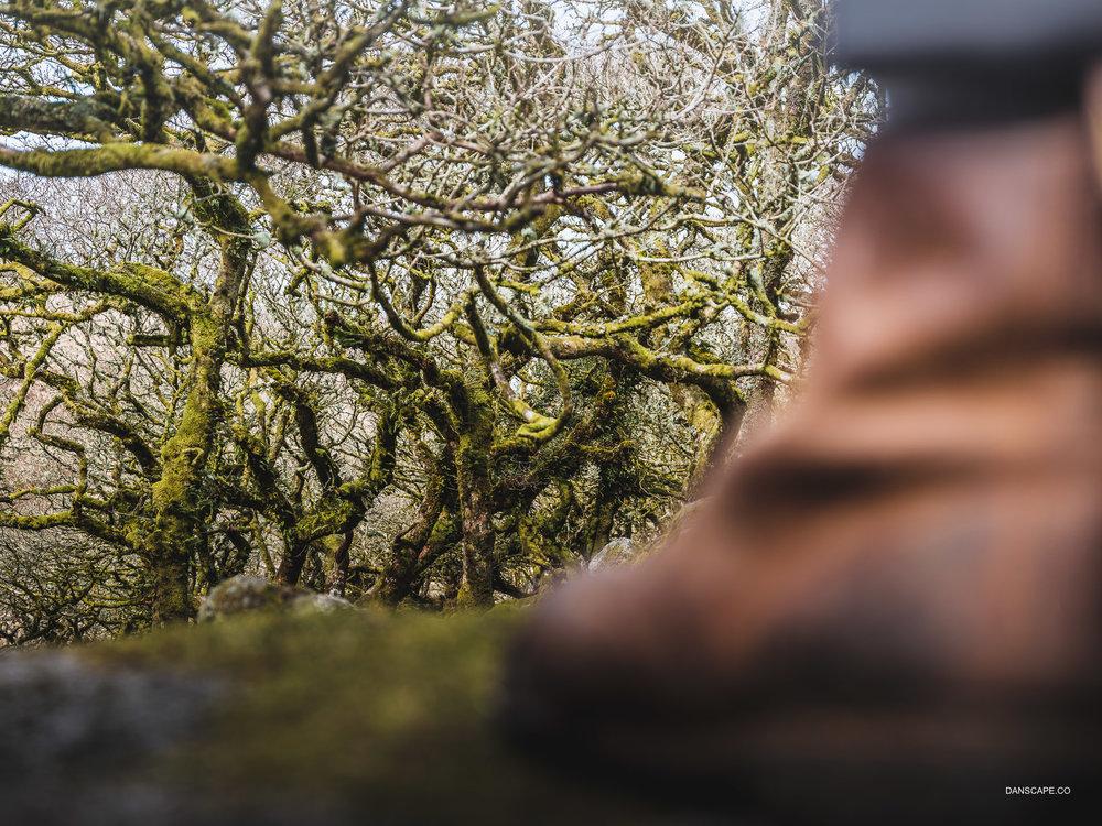 Enter The Winding Wistman's Wood