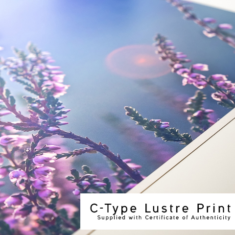 Square Lustre Print Close Up.jpg