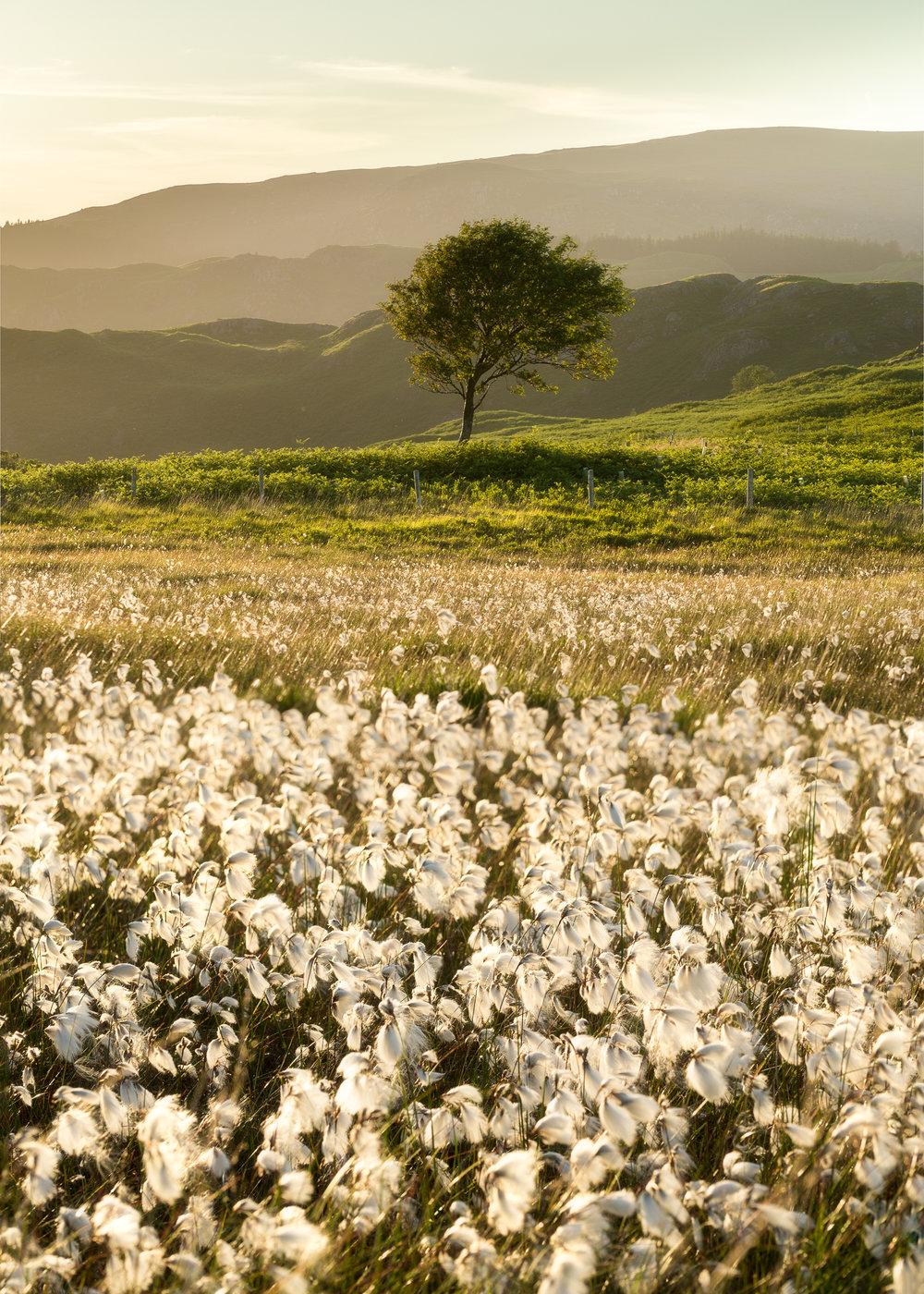 Cottongate 1.jpg