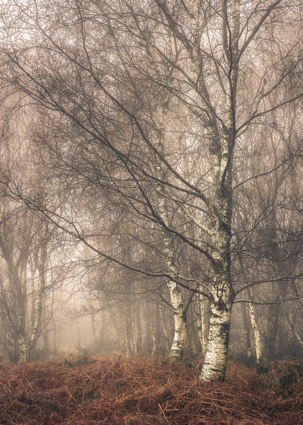 Trees long lens 1.jpg
