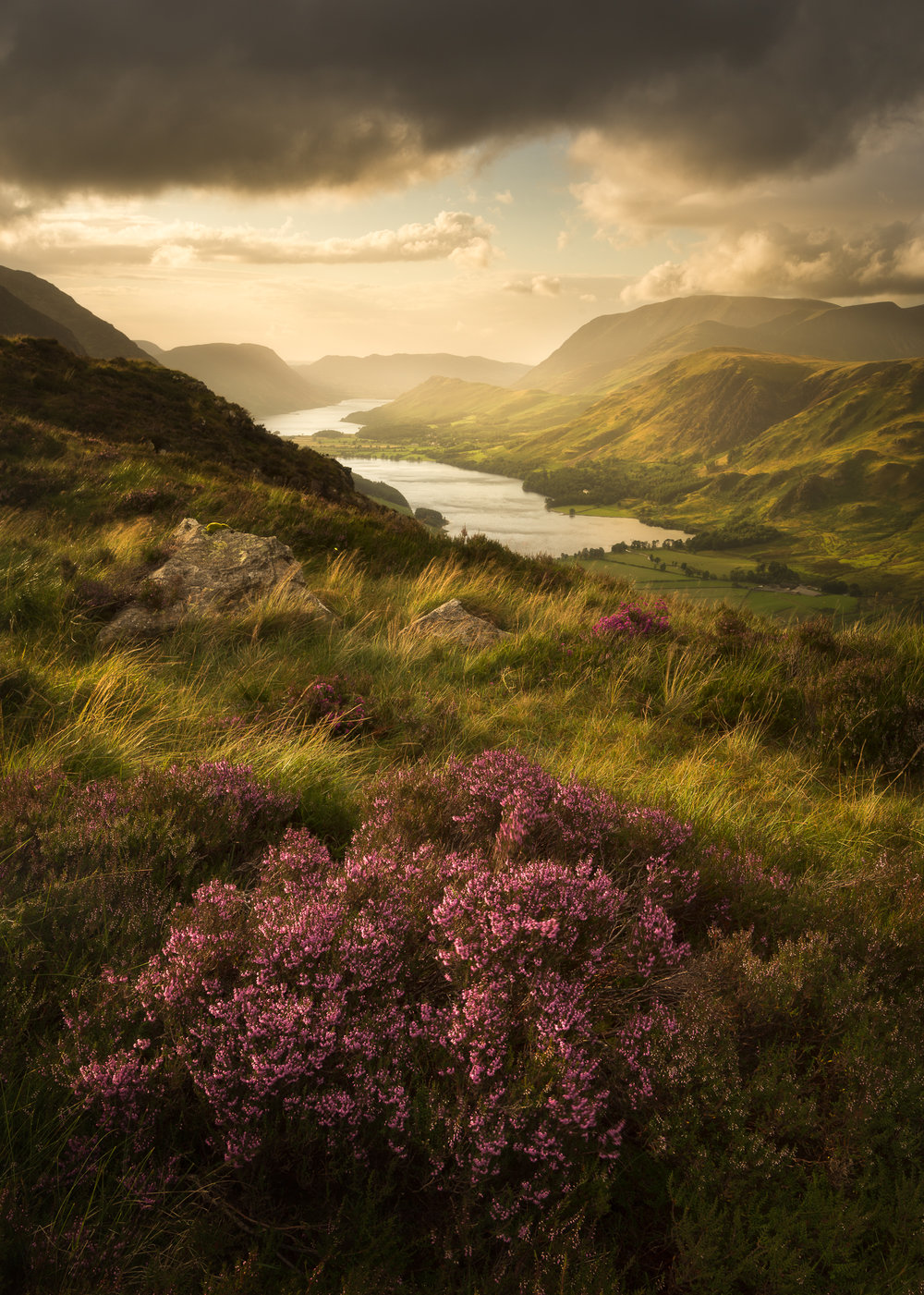 Buttermere Bloom