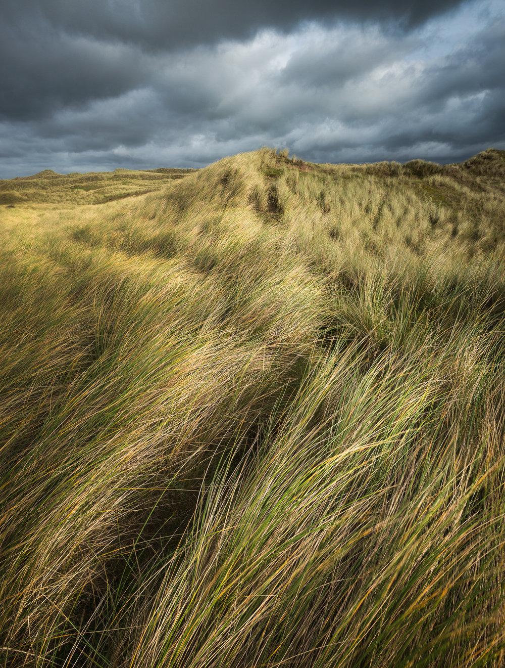 Dunes path.jpg