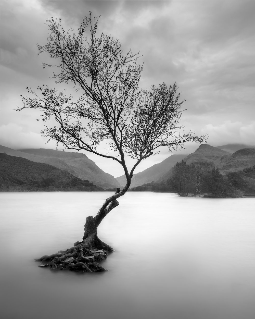 The llyn padarn tree.jpg