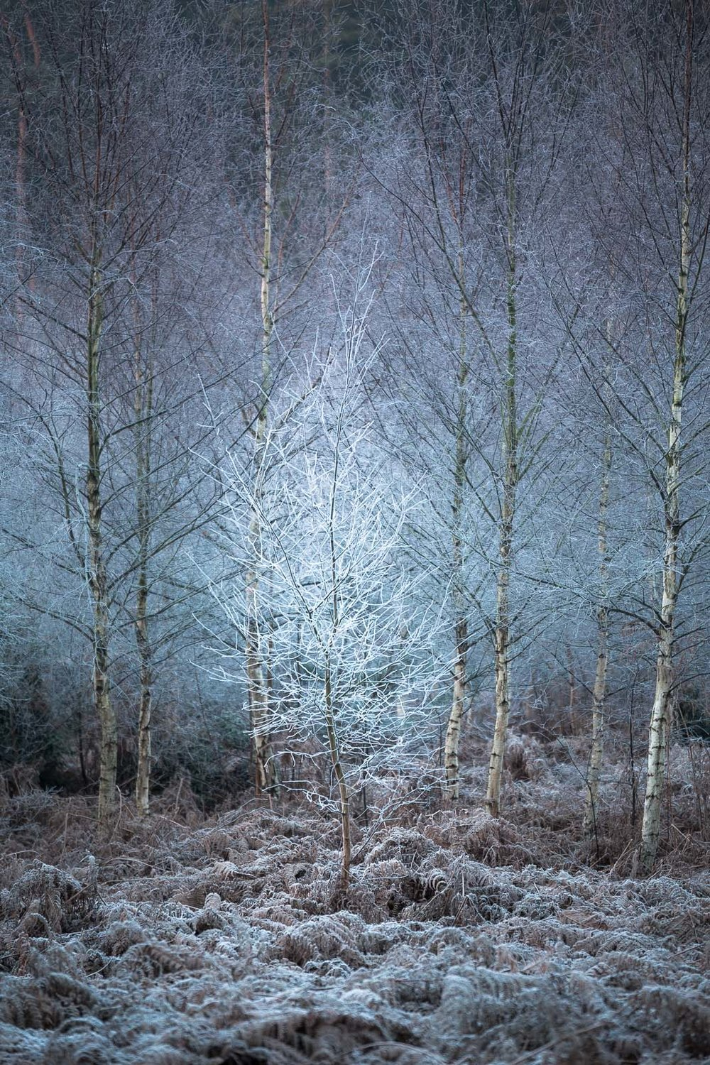 004 - Frostiest Tree in the Forest.jpg
