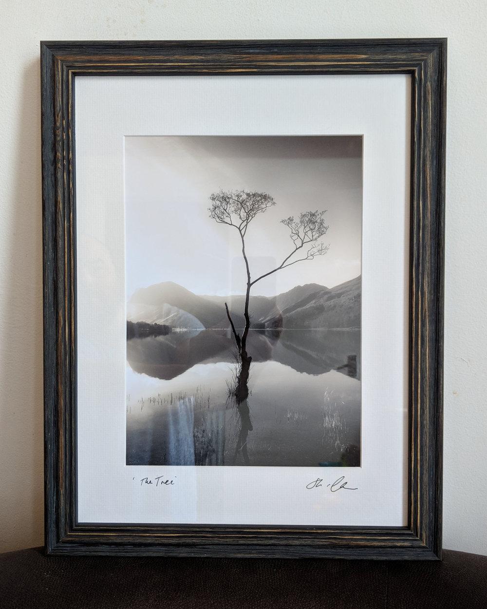 'The Tree' - framed in Distressed Oak